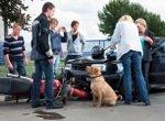 Hundekrankenversicherung für Verkehrsunfälle