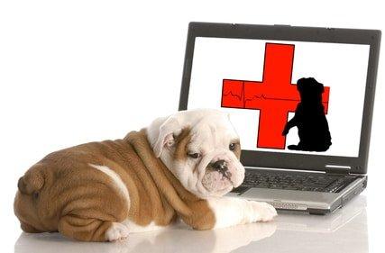 Hundekrankenversicherung Preisvergleich