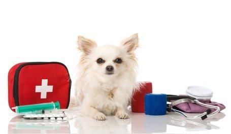 Hundekrankenversicherung für Chihuahua