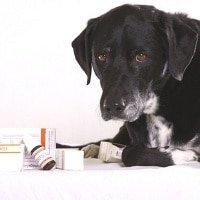 Hundekrankenversicherung für ältere Hunde