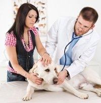 Hundekrankenversicherung Vergiftungen
