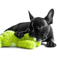Hundekrankenversicherung Welpen