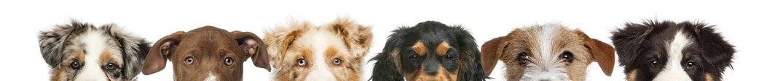 Hunderassen Quickfinder