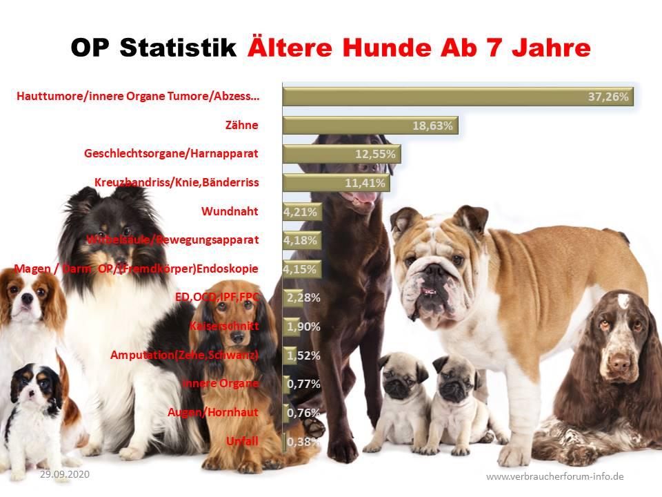 Statistik über Krankheiten bei älteren Hunden
