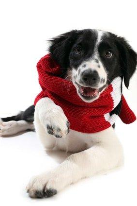 Versicherung für kranke Hunde