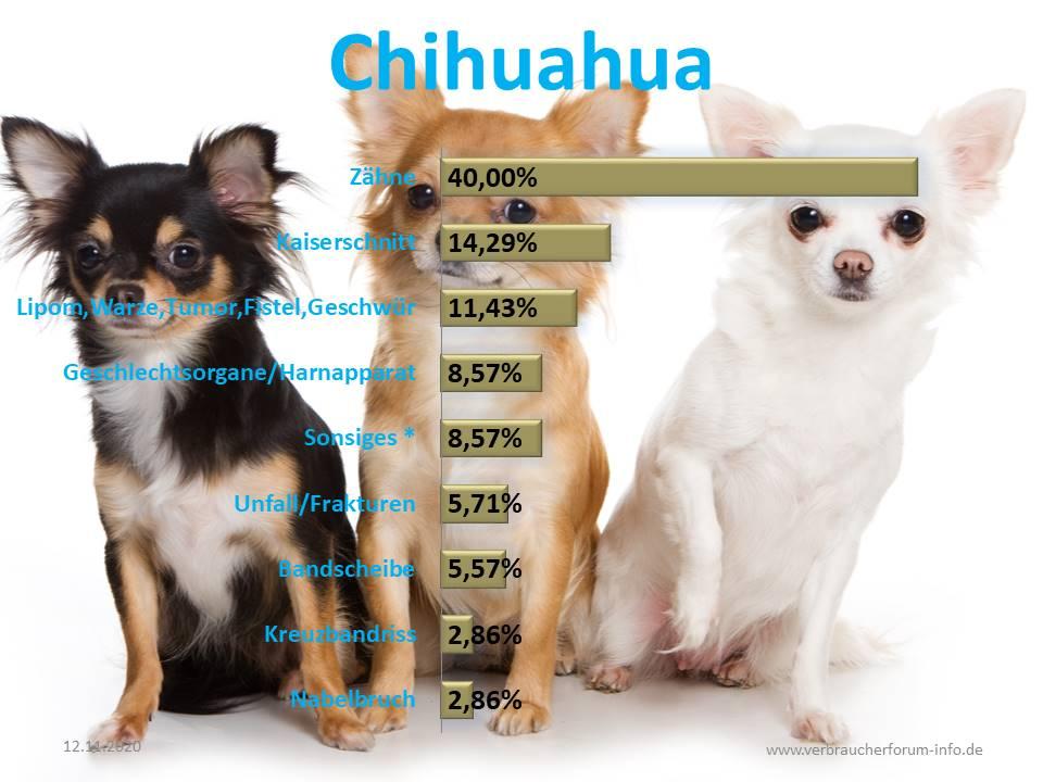 Die häufigsten Krankheiten und Operationen beim Chihuahua