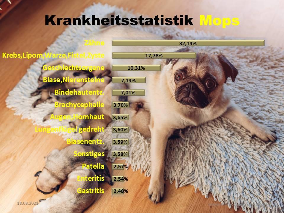 Statistik über die häufigsten Krankheiten beim Mops