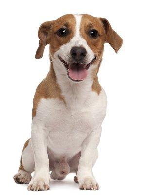Hundekrankenversicherung Terrier