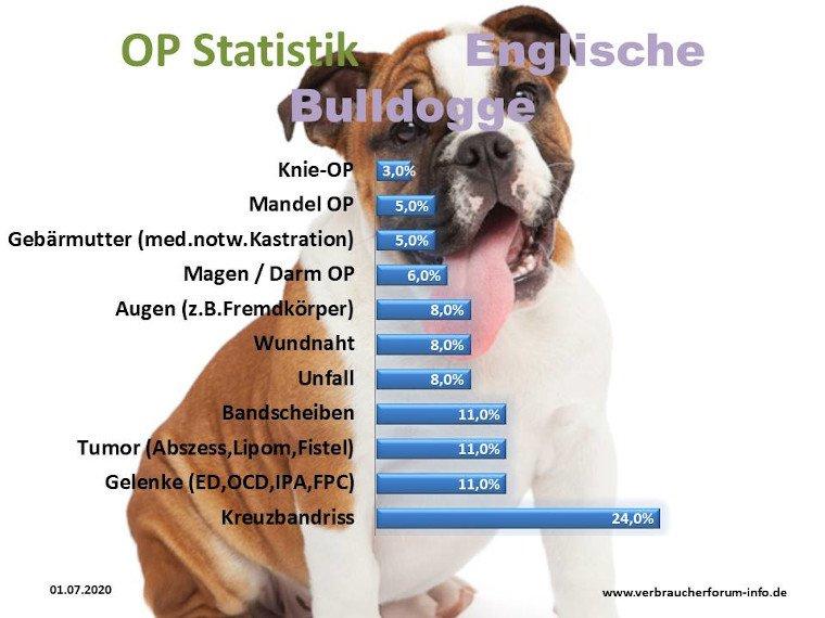 Häufige Krankheiten bei der englischen Bulldogge