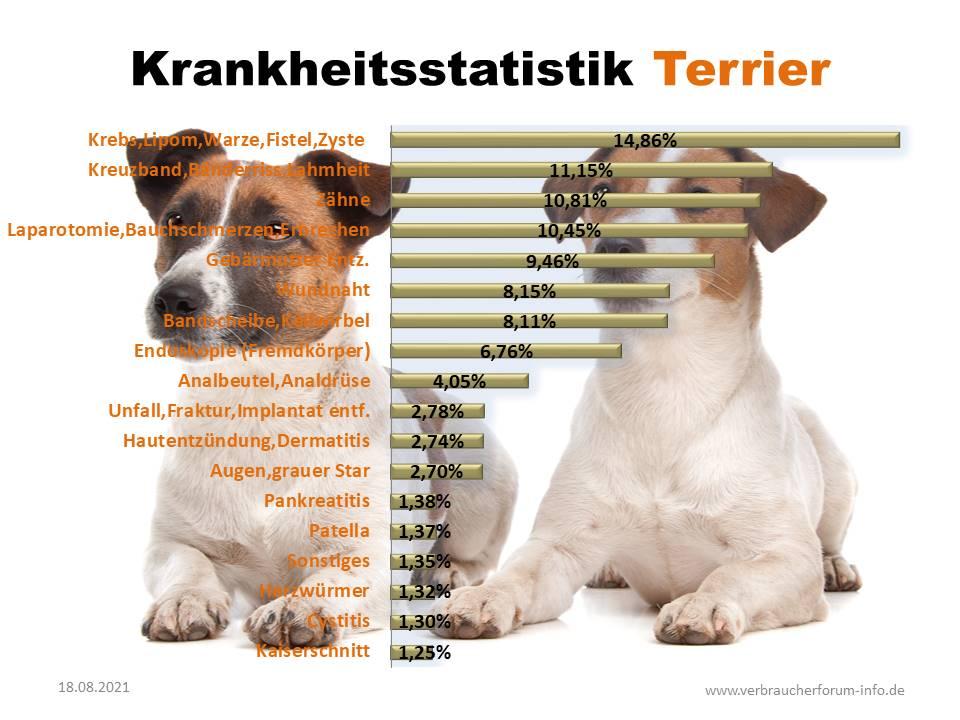 Häufige Krankheiten beim Jack Russel Terrier