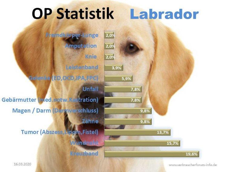 Statistik der häufigsten Krankheiten beim Labrador