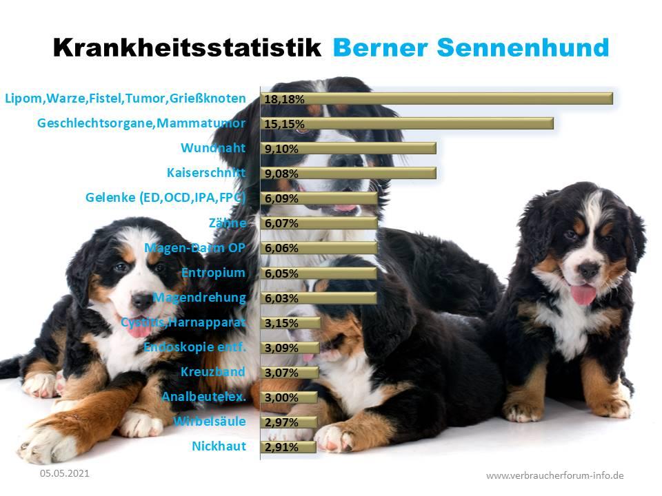 Statistik über häufige Krankheiten beim Sennenhund