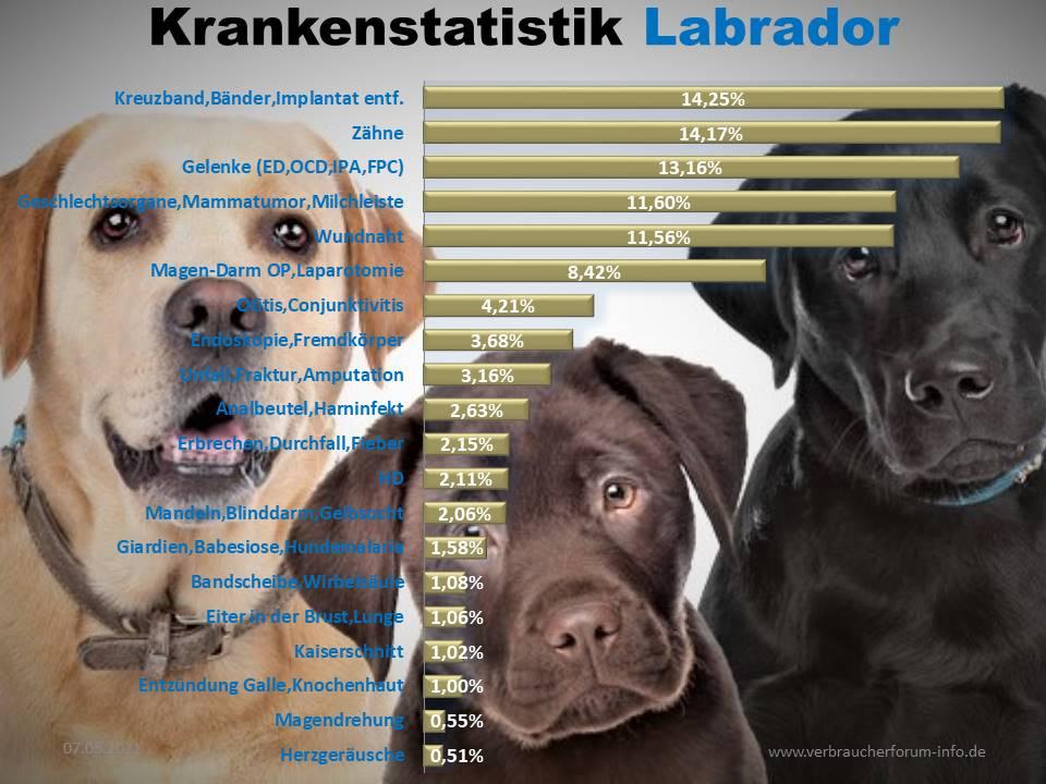 Labrador Statistik der häufigsten Krankheiten und Operationen