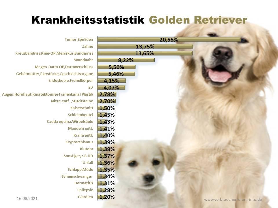 Golden Retriever Statistik über die häufigsten Krankheiten und Operationen