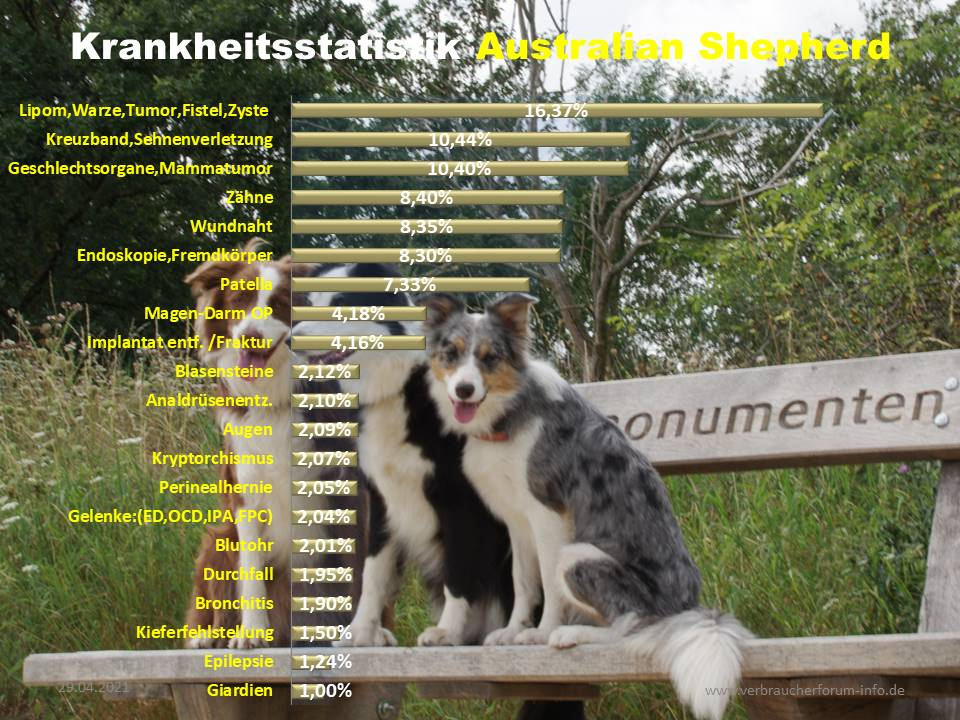 Australian Shepherd Statistik der häufigsten Krankheiten und Operationen