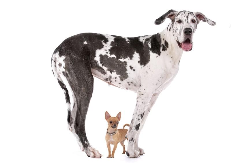 Hundekrankenversicherung für Dogge