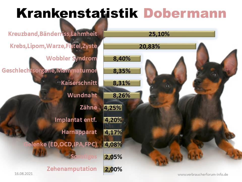 Statistik über die häufigsten Krankheiten beim Dobermann