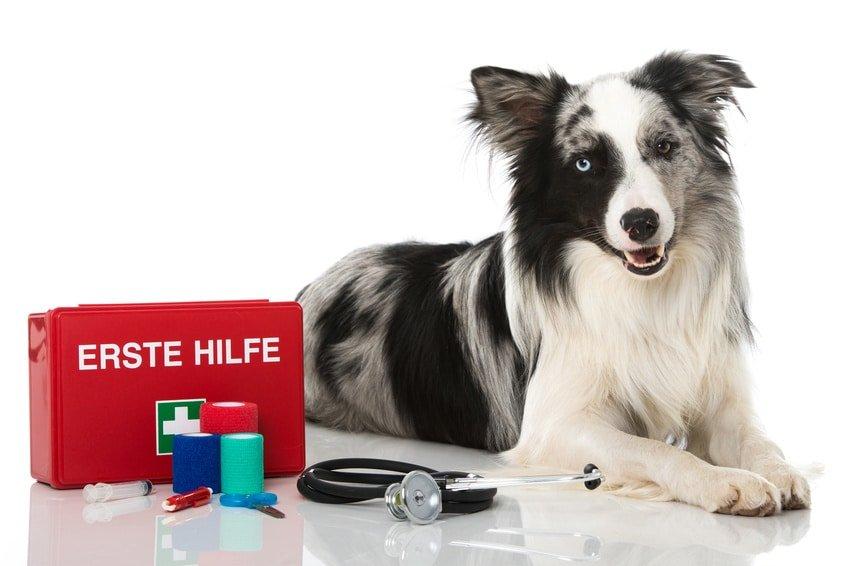 Hundekrankenversicherung für Border Collie