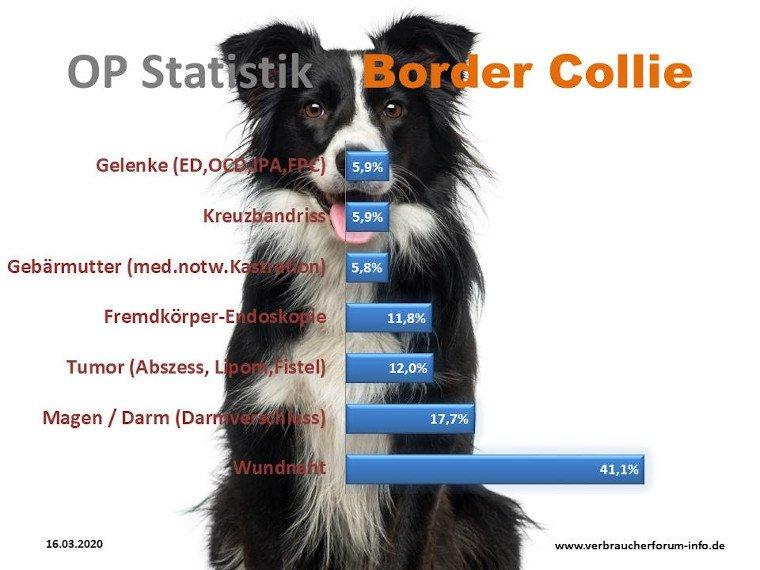 Die häufigsten Krankheiten beim Border Collie