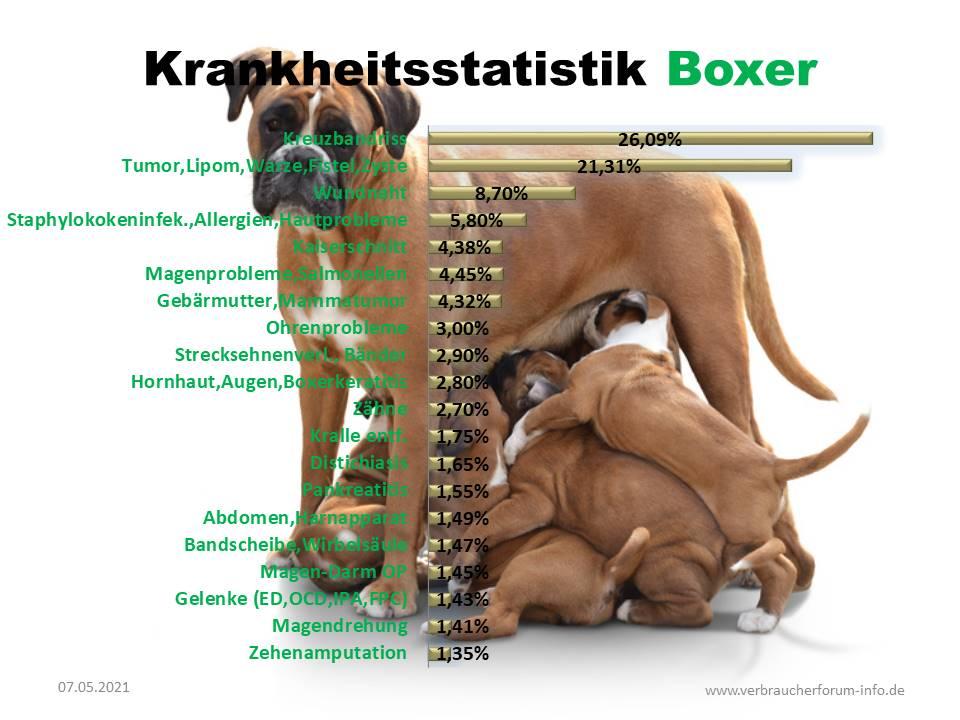 Statistik über die häufigsten Krankheiten beim Boxer