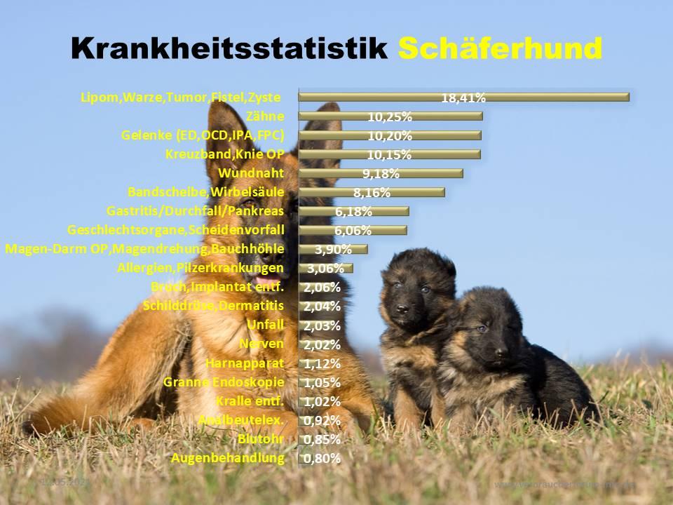 Statistik über die häufigsten Krankheiten beim Schäferhund