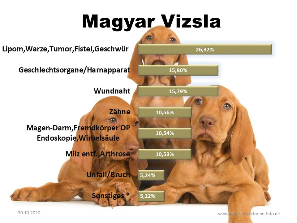 Statistik über häufige Erkrankungen beim Magyar Viszla