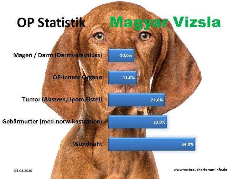 Die häufigsten Krankheiten beim Magyar Vizsla