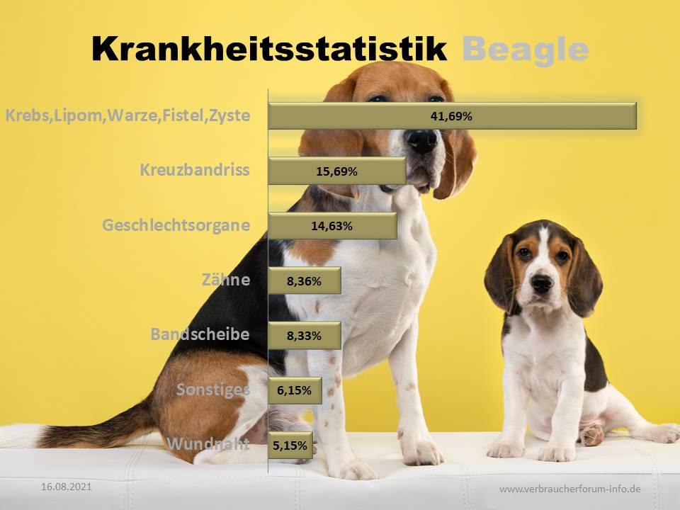 Hundekrankenversicherung für Beagle