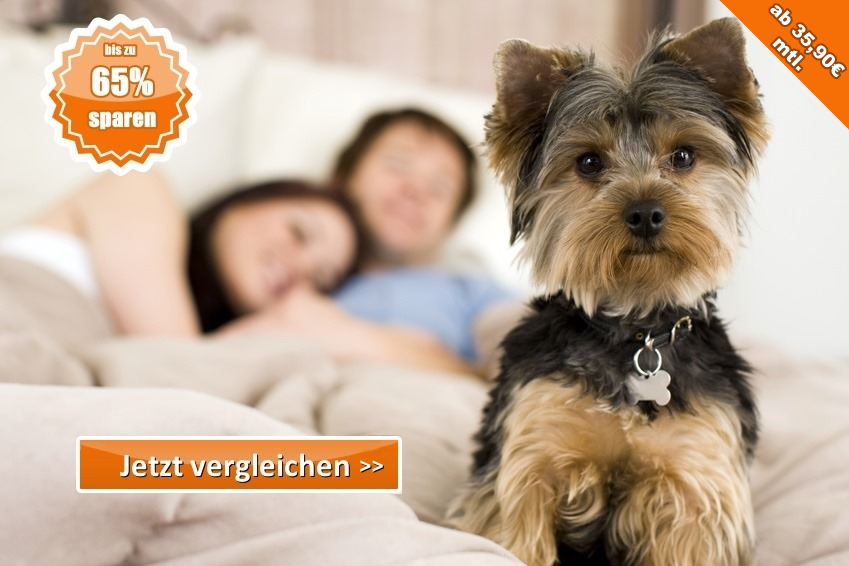 hunde-krankenversicherung24.de